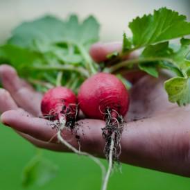 Møde通信Vol.6:食の安全と有機食品市場
